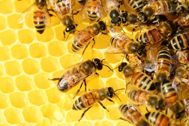 Buzzwords that should buzz off